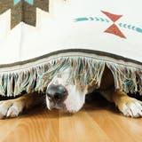 Für Hunde ist das laute Feuerwerk kein Genuss, sondern eine Qual. (Bild: Getty)