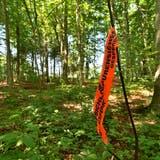 Eine Spaziergängerin hat im Juli 2017 eine verkohlte Leiche im Wald bei Pulvershaus gefunden. (Bild: Manuel Nagel)