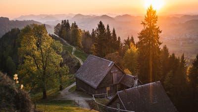 Ein besonders beliebtes Fotosujet. Der einsame Baum auf dem Kapf oberhalb der Drei Weieren. (Bild: Antje Venzin)