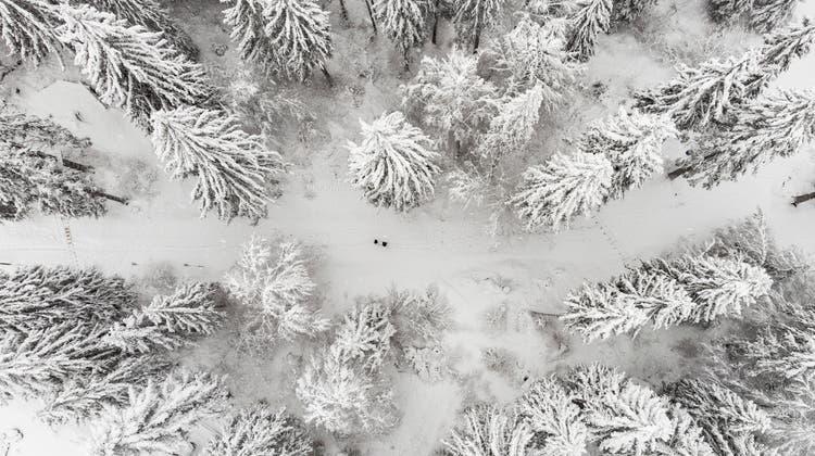 Waldbesitzer sollen unterstützt werden, damit sie ihren Wald pflegen können. (Keystone)
