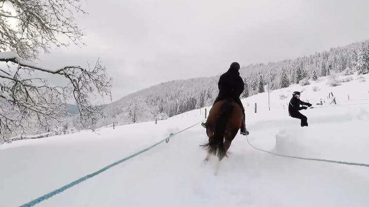 «Man bekommt ziemlich viel Schnee ins Gesicht»: Skifahren mit Pferd im Berner Jura
