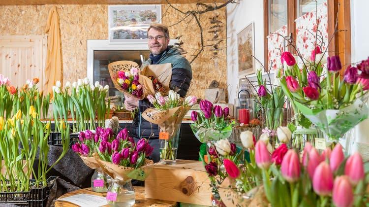 Seit mehr als 20 Jahren baut Erwin Koller Rosen an – und jetzt auch Tulpen. (FabioBaranzini)