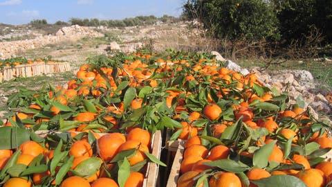 Jetzt sind die italienischen Orangen reif: Wir haben die besten Zitrusfrucht-Rezepte zusammengetragen