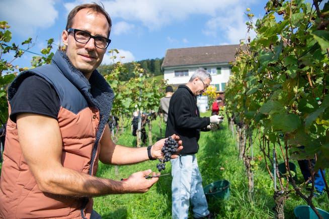 Winzer Johannes Meier erntet mit seinen Helfern Trauben aus seinem Rebberg in Weinfelden.