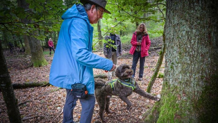 Filou ist fündig geworden und zeigt den betroffenen Baumstamm an. René Aebiwartet schon mit dem Futterbeutel, Trainerin Anja Wedig beobachtet im Hintergrund. (Bild: Ralph Ribi)