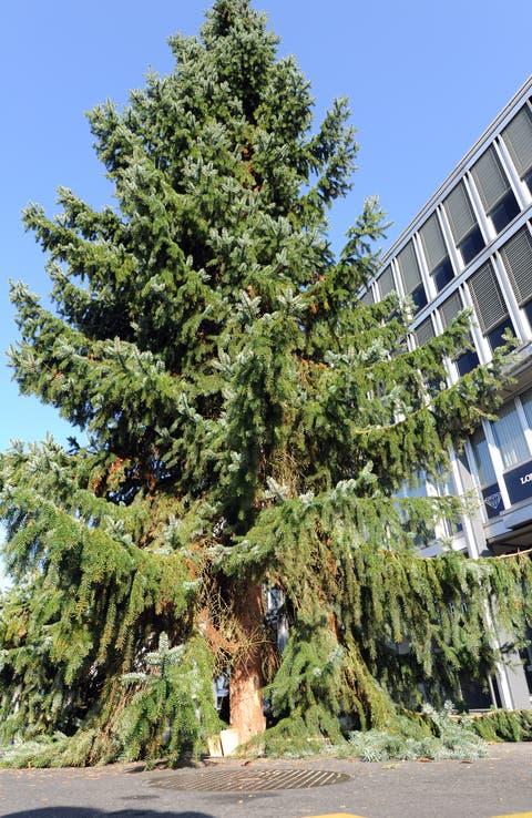 Ein Christbaum auf dem Kreuzlinger Boulevard.