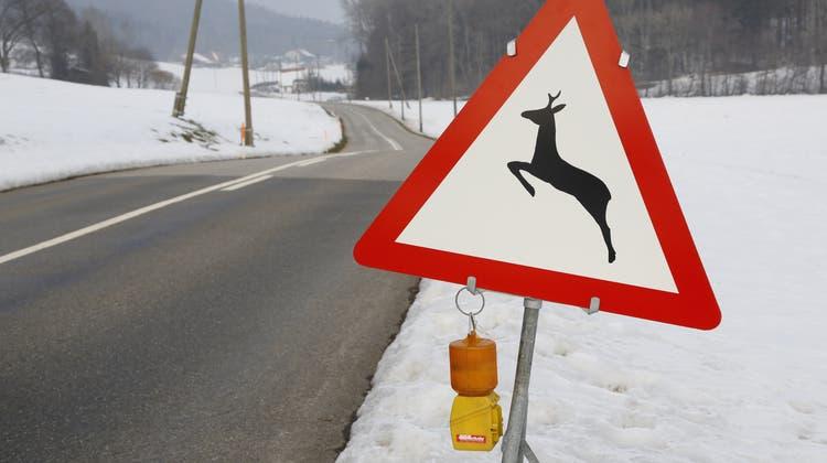 Wildwechsel-Verkehrsschild zwischen Rüttenen (SO) und Balm (SO). Unfälle mit Wildtieren verursachen jährlich Tausende tote Tiere und geschätzte 50 Millionen Franken Sachschaden. (Hanspeter Baertschi / SZ)