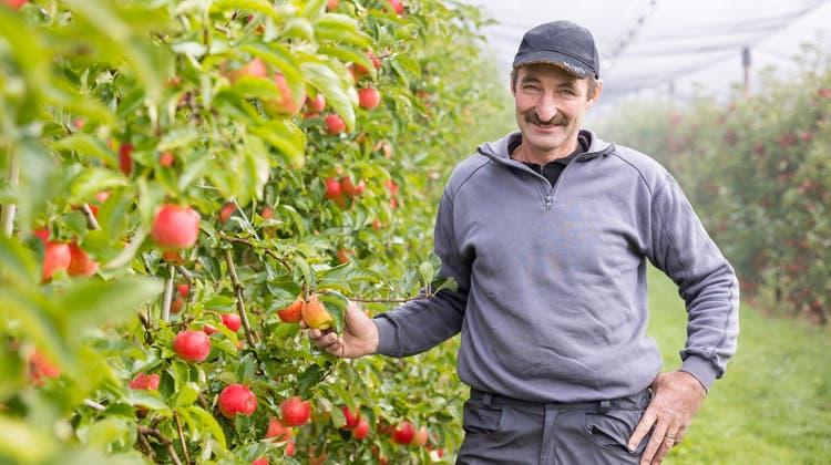 Andreas Seeholzer auf seiner Apfelplantage. Aus seinem Obst gewinnt er einen Süssmost, der zu den besten der ganzen Schweiz zählt. (Bilder: Severin Bigler)