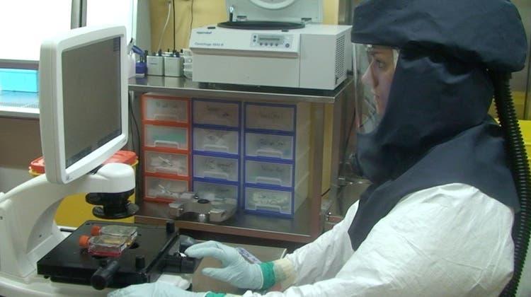 Mit dem neuen Modell ist Forschung zu SARS-CoV-2 nicht mehr auf Hochsicherheitslabors beschränkt. Im Bild das Hochsicherheitslabor des Instituts für Virologie und Immunologie (IVI). (IVI)