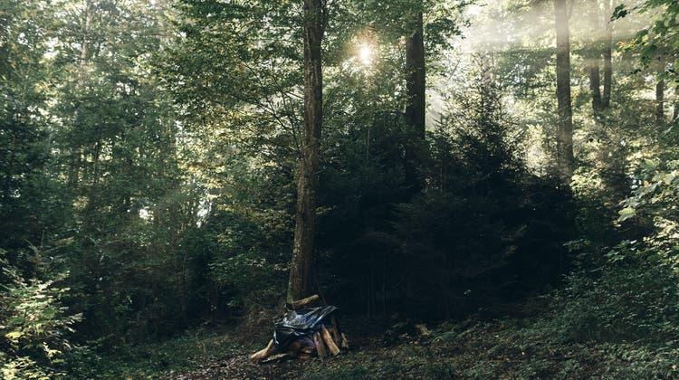 In diesem Waldstück in Ettingen ist die letzte Ruhestätte geplant. (Roland Schmid)
