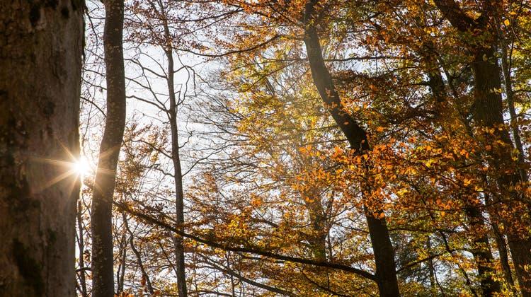 Morgendliche Herbststimmung in der Grenchner Witi. (Oliver Menge)