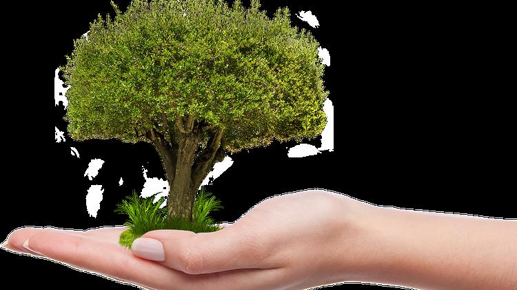 Die Stadt Paris will 170'000 Bäume pflanzen. (Symbolbild: Pixabay)