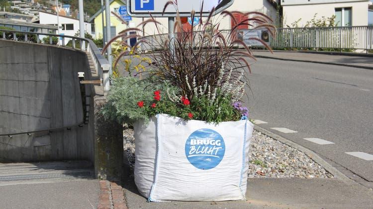 Ein Bigbag«Brugg blüht» mit Blumen im Ortsteil Umiken. (Claudia Meier (2. Oktober 2021))