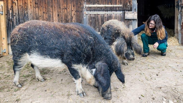 Marlene Bieri mit der Ziege Baba: «Er ist mein Schmusebock.» (Kenneth Nars)