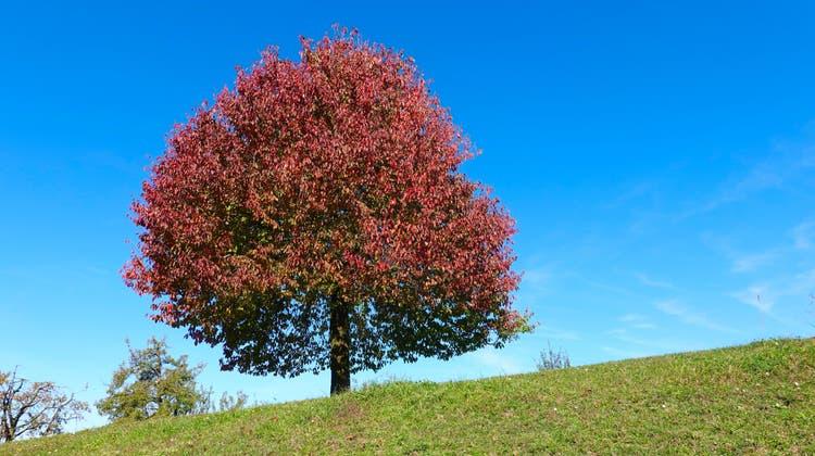Markante Bäume sollen möglichst erhalten werden. (Beispielbild)