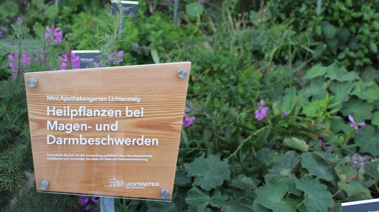 ImApothekengartenwachsen Kräuter, die von der Bevölkerung gepflückt werden können. (Bild: PD)