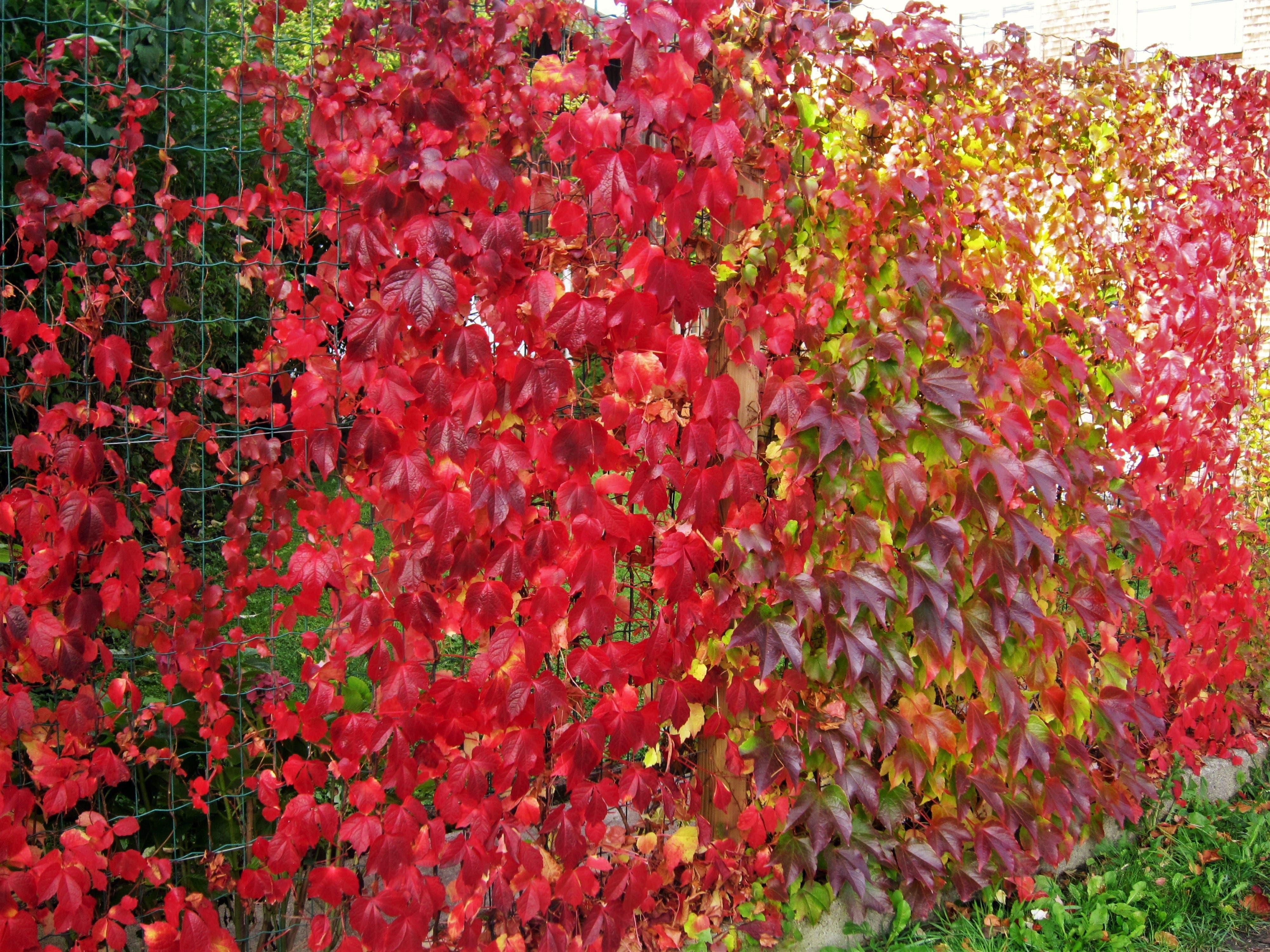 Typische Herbstfarben.