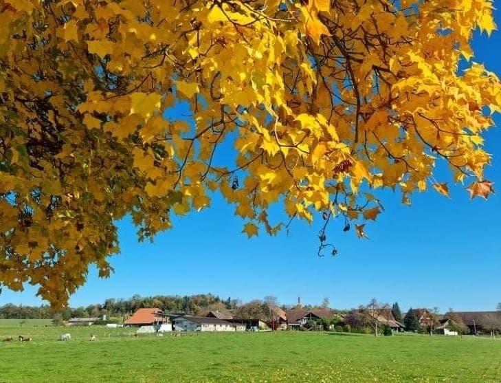 Goldener Oktober.