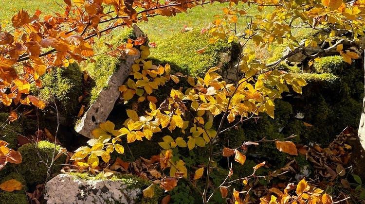 Herbststimmung (Bruno Affolter)