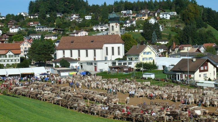 Viehschau Mosnang. (Bild: Franz Steiner)