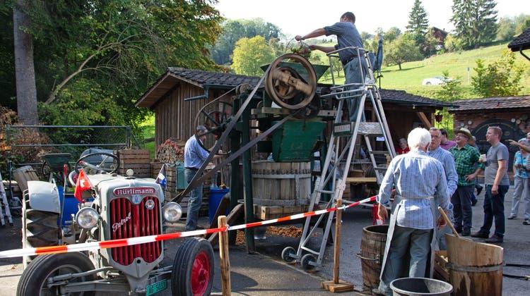 Am diesjährigen Herbstmarkt weckte die historische Mostpresse aus dem Jahr 1925 die Neugier der Besuchenden. Philipp Stüchelisteigt auf die Leiter, um die Maschine mit neuem Obst zu füllen. (Verena Schmidtke)