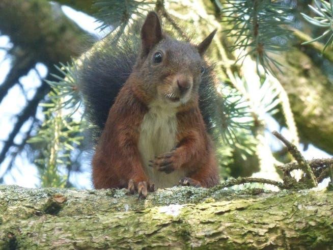 Das Eichhörnchen blickte Regula Altwegg aus Bissegg direkt in die Kamera.