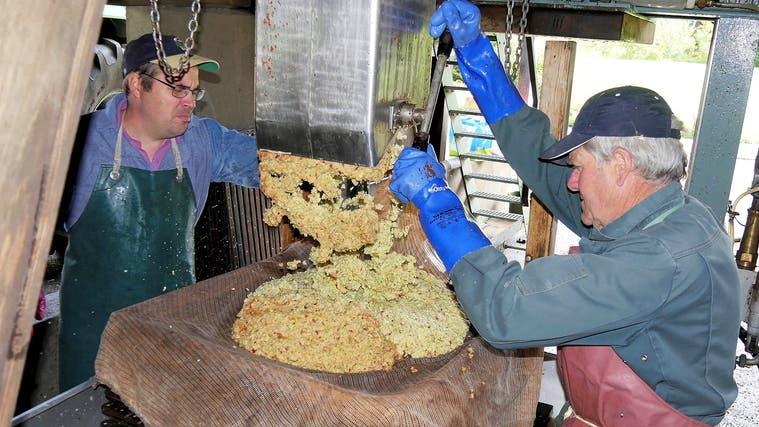 In der historischen «Fledermosti» in Hellikon landen dieses Jahr deutlich weniger Äpfel in der Presse als in anderen Jahren. (Zvg)