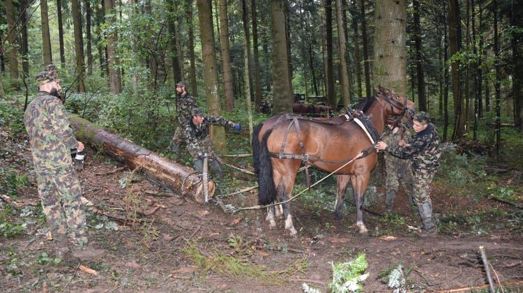 Bevor die Pferde anziehen, wird das Geschirr kontrolliert, damit sie sich nicht verletzen.. (Bilder: Peter Brotschi)