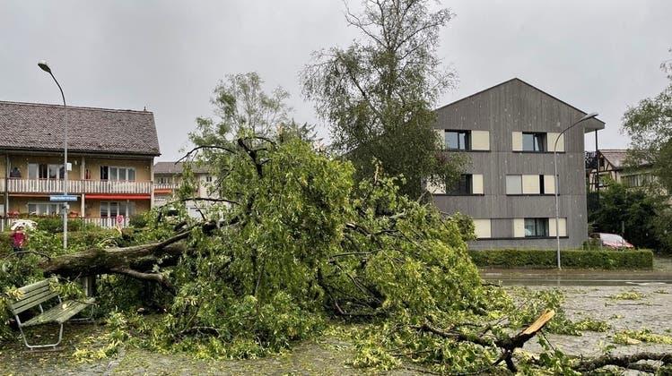 Sturm Bernd entwurzelte Mitte Juli die Linde vor der Alten Kirche in Albisrieden. (Archivbild) (Zvg/Hans Amstad)