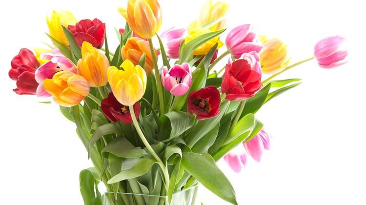 Heute Blumen bekommen? Wir zeigen, mit welcher Methode sie am längsten haltbar bleiben