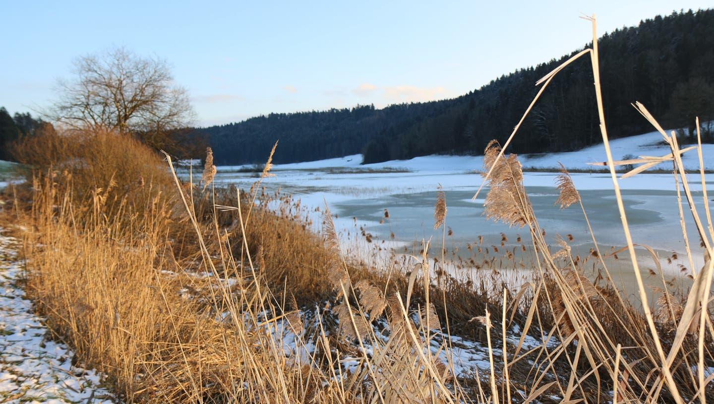 Blick auf die Ägelsee-Moorlandschaft zwischen Littenheid und Wilen. (Bild: Hans Suter)
