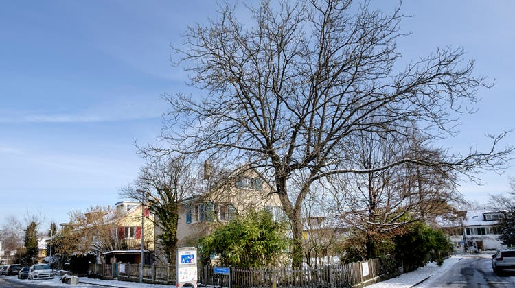 Hier an der Bedrettostrasse 15 auf dem Bruderholz soll ein Doppeleinfamilienhaus entstehen. (Kenneth Nars / BLZ)