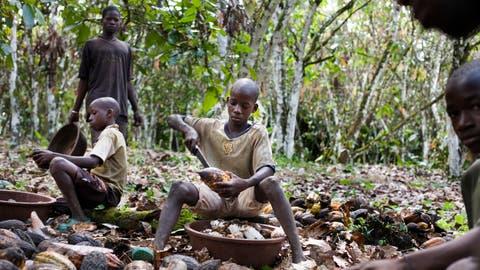 In der Kakaoindustrie ist Kinderarbeit immer noch stark verbreitet. (Bild: JessicaDimmock / VII / Redux / laif)