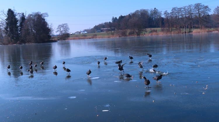 Am Samstag noch die Bise und viele Wellen, am Sonntag dann eine dünne Eisschicht auf demInkwilersee