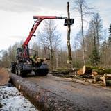 Wegen Trockenheit der letzten Jahre unter Stress: Forstbetrieb muss mehr Bäume fällen