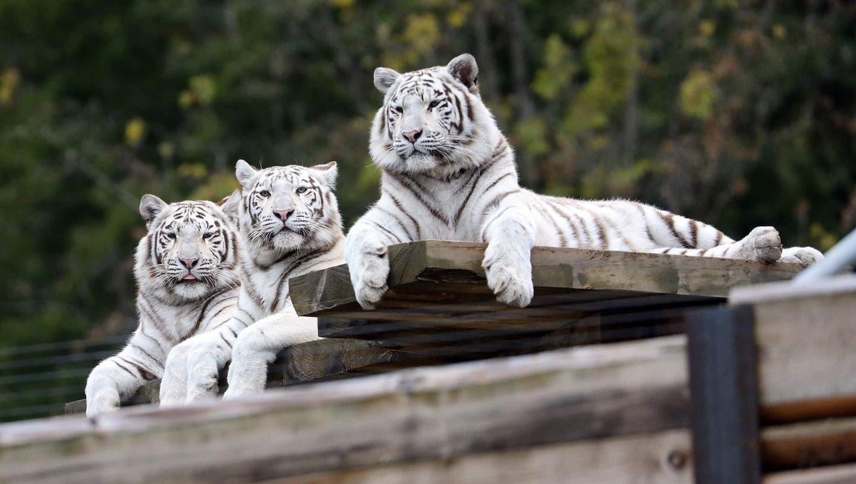 Der Sikypark verzeichnete letztes Jahr rund 77'000 Besucher. (zvg)