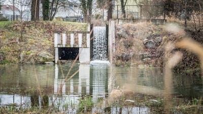 Im Murg-Auen-Park: Beim Zulauf des Kanals in den Rossgumpen soll zeitnah ein Wasserrad installiert werden. (Bild: Andrea Stalder)
