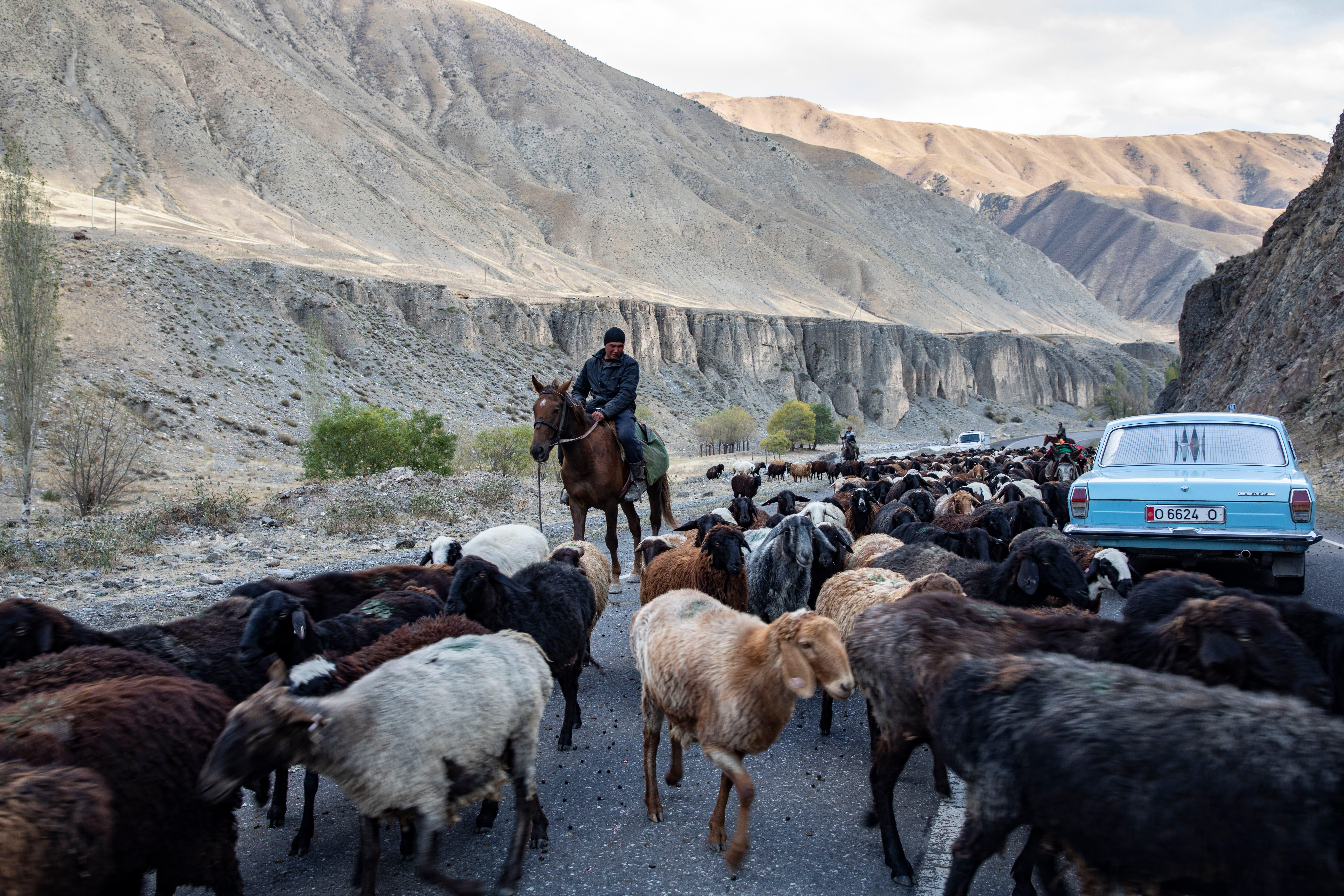 Auf der Auffahrt zum 3600 m ü. M. gelegenen Taldyk-Pass in Kirgistan treibt ein Schafbauer seine Herde vor sich her.