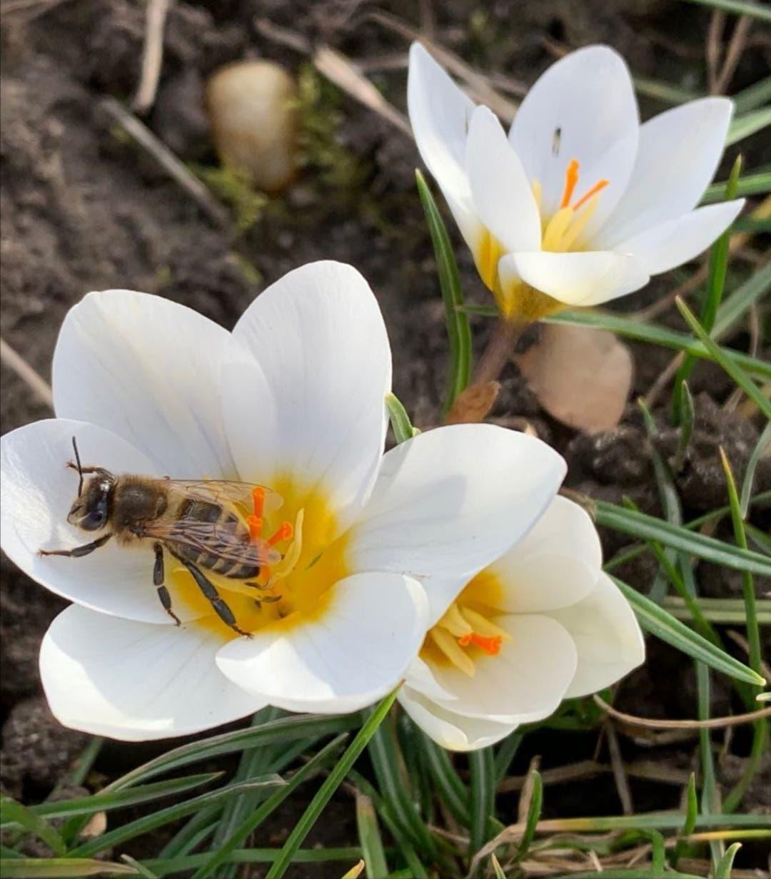 Ein besonders schönes Frühlingsbild aus Müslen, Birmenstorf. Vielen Dank dafür!