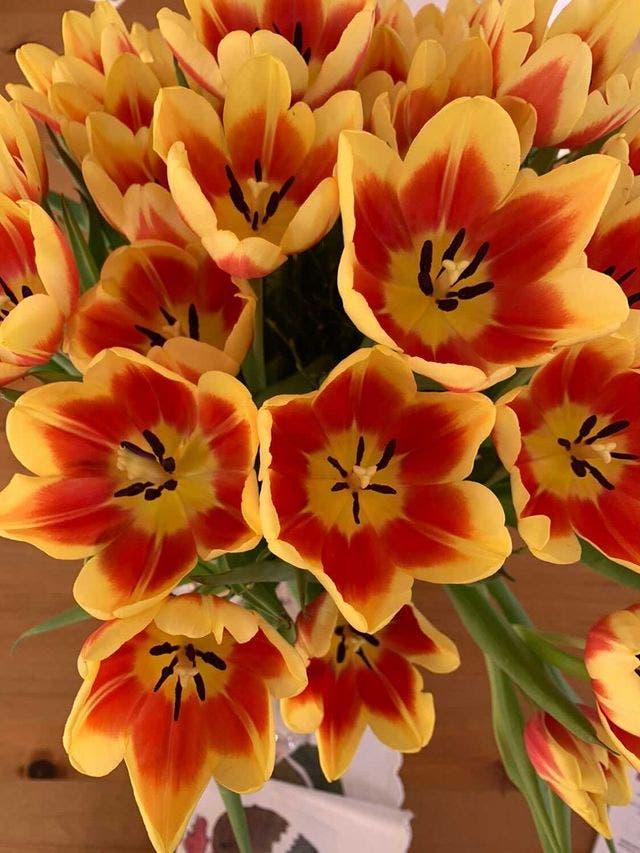 Damaris Buchenhorner schmückt das eigene Zuhause mit bunten Frühlingsblumen.