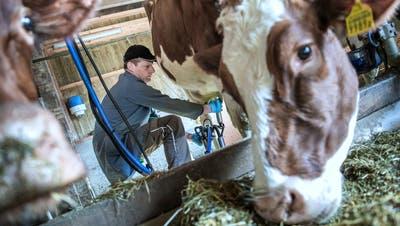 Thomas Wigger melkt seine Kühe auf dem Hof in Willisau: Kürzlich hat der 42-Jährige auf Biomilch umgestellt. (Bild: Pius Amrein  (Willisau, 23. Februar 2021))