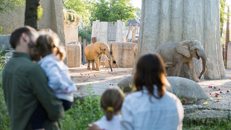 Die Tiere in den Aussengehegen des Basler Zoos können ab Montag wieder besichtigt werden. (Zoo Basel)
