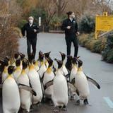 Freudentanz zur Wiederöffnung: Zoo Zürich macht bei«Jerusalema Challenge» mit