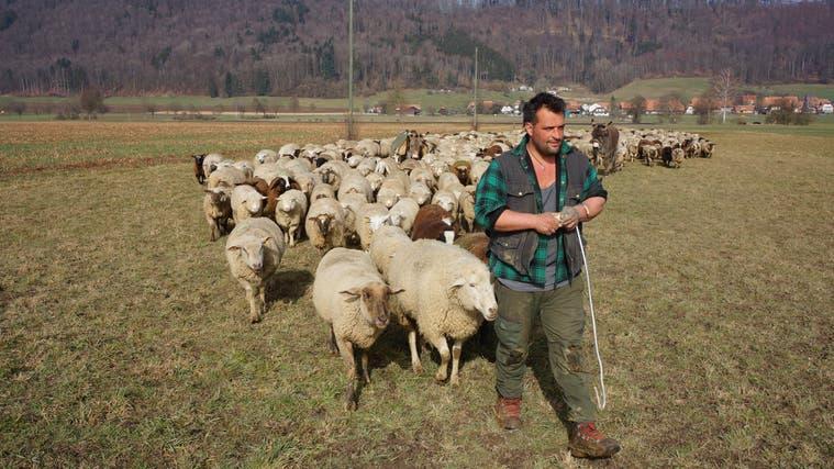 Mauri der Schäfer mit seinen 500 Schafen, Chicco und zwei Eseln (Urs Byland)
