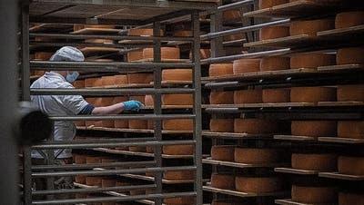 Ein gutes Jahr für Schweizer Käse: Gleich zwei Ostschweizer Käsereien bauen Produktion aus