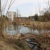 Blick auf die Weiher im Naturschutzgebiet Augarten. (Bild: Larissa Flammer (26. Februar 2021))