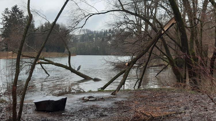 Werdinsel, Limmat: viel Wasser und abgeknickte Bäume. (Bild: Matthias Scharrer)
