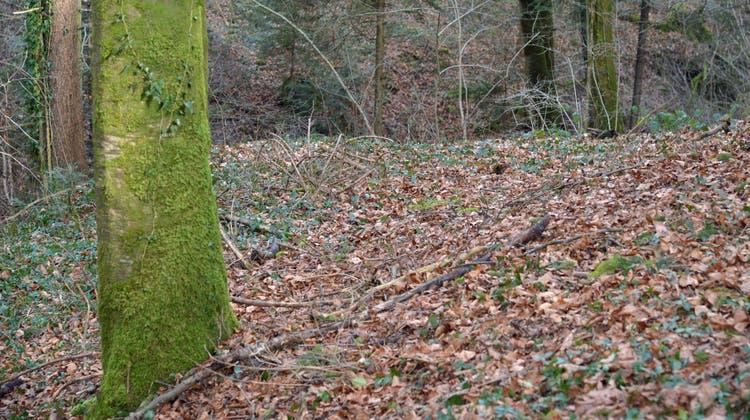 An dieser Stelle in Zezikon hat der Waldbesitzer damals eine Frauenleiche gefunden, die in einen Teppich eingewickelt war. (Bild: Mario Testa (Zezikon, 30. Januar 2018))