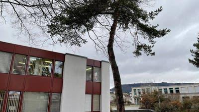 Die Föhren in Stein müssen gefällt werden. Eine davonsteht direkt am Gemeindehaus. (Zvg / Aargauer Zeitung)