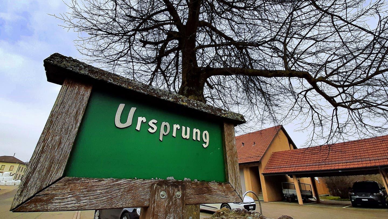 Ein von Schneeflocken bedeckter Baum. (Picasa / Aargauer Zeitung)